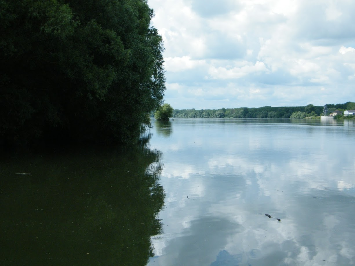 Danube divides the forest